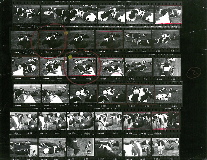 A contact sheet Matter produced while working at Knoll. | PC: Herbert Matter | Knoll Inspiration