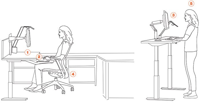 An Ergonomic Setup Guide Sit to Stand Workstation